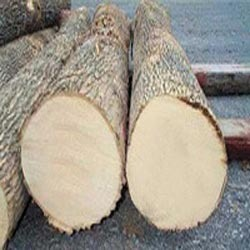 Ash Wood Suppliers Manufacturers Amp Traders In India
