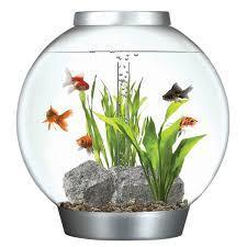 All Types Of Fish Aquarium Dog Foods At Rs 150 Fish Aquarium