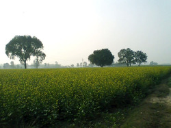 Agriculture Land In Budaun Up