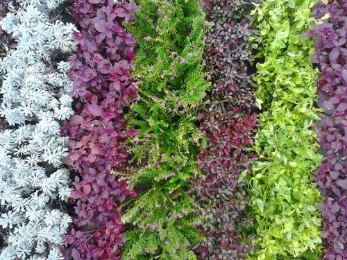 vertical garden wall - Garden Wall