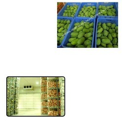 Mango Cold Storage for Agriculture Use