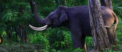 Kalatop Wild Life Sanctuary Tour