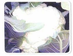 Asia White 70 Cauliflower Seeds
