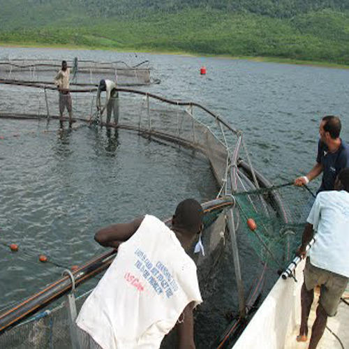 Fish Farming, Aquaculture in India