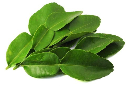 Natural Kaffir Lime Leaves, Grade: A Grade, Packaging Type: Thermocol Box,  Rs 500 /kilogram | ID: 8849965888