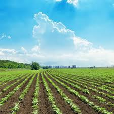 Agricultural Lands, Size/ Area: Depend On Service