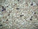 Unclened Tamarind kernel Seeds