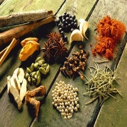 Seed Spices Processing Consultant