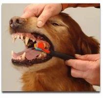 Pet Parlour Cum Grooming Service