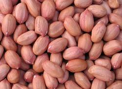 Raw Groundnut, Gujarat, Packing Size: 50 Kg