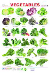Indian Green Vegetables List Indian Green Vegetable...