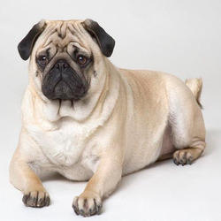 Hutch Dog Breed Price