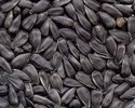 Sunflower Seeds For Human Consumption And Bird Feeds, Pack Size: 25 Kg
