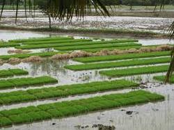 Agriculture Production Services