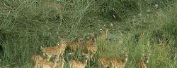 Rajaji National Park Tour