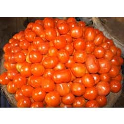 rate of tomato in rate of tomato in indore mandi mandi
