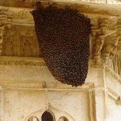 Bee Hive Removal in Bengaluru