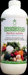Bacigold