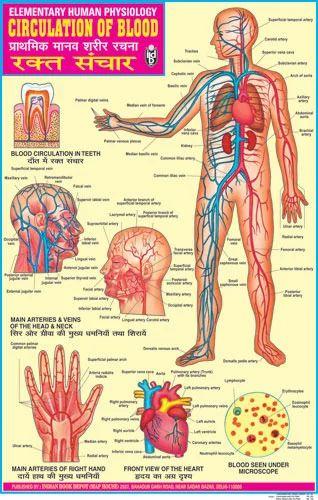 Human anatomy and physiology pdf in hindi