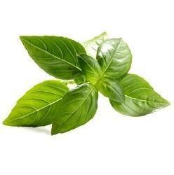 Indian Basil Oil
