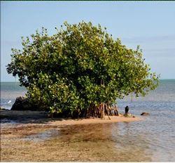 Coastal Land Development