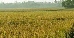 24 Acres Agricultural Land