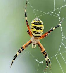Spider Control Service