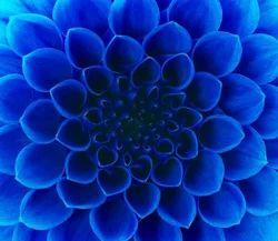 LED Flower Ceiling