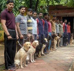 Dog Squad Management Services