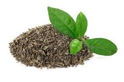 Tea Enzymes