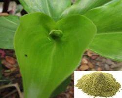 Insulin Leaf Powder