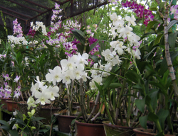 Flowering Plant in Thrissur - Latest Price & Mandi Rates from