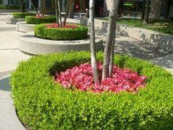 Horticulture services in navi mumbai horticulture service solutioingenieria Images