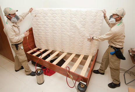 Marvelous Bed Bug Pest Control Services