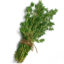 Thyme Extracts