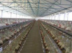 Poultry Hatchery, मुर्गी के अंडे सेने की