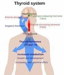 Hypo/ Hyperthyroidsm Treatment